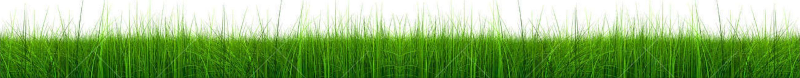 Landscape and pool products - image grass-scaled on https://avario.ae